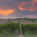 le colline del verdicchio di jesi 800x540 iesi1 optimized